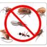 S K Pest-Chandigarh-Pest Control