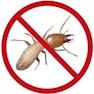 Pestaid Inc.-Delhi-Termite Control