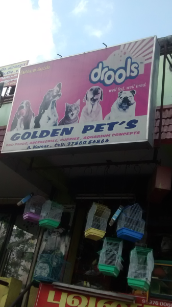 Golden Pets in Mettupalayam, Coimbatore-641301 | Sulekha