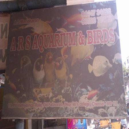 Pet Shops in Pallavaram, Chennai, Stores | Sulekha Chennai