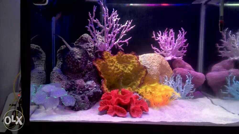 Aquarium Product Supplies Dealers in Jadavpur, Kolkata