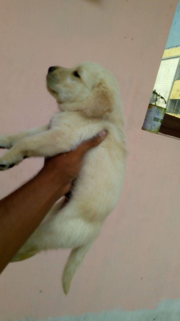 Pet Adoption in Chennai, Rescue Services | Sulekha Chennai